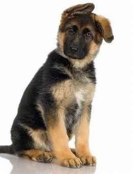 Реферат на тему мое любимое животное собака 6407